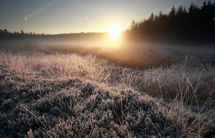 misty autumn sunrise over frosted meadow
