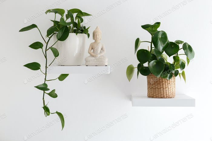 Houseplants on the shelf