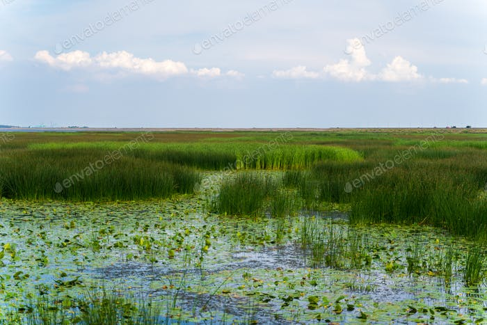 Large swamp with view of city, thickets of grass, water lilies, a city view of reservoir