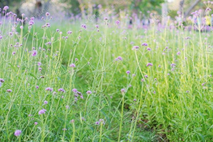 Pflanzen von Blumen mit grünem Gras