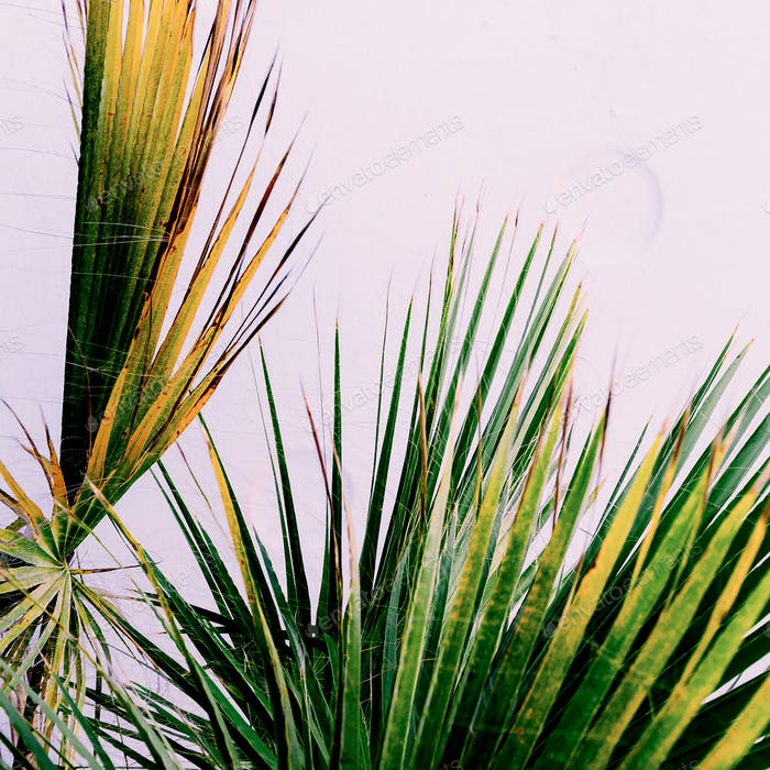 Palm on pink. Tropical design minimal fashion print
