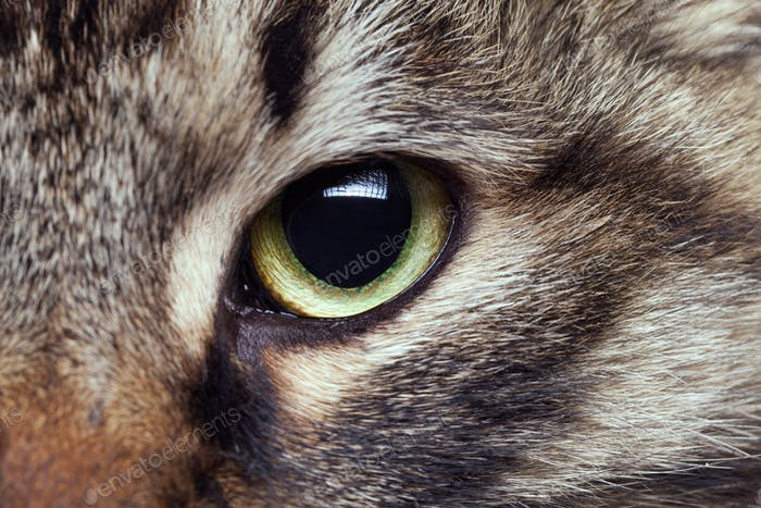 Cat eye in close up photo