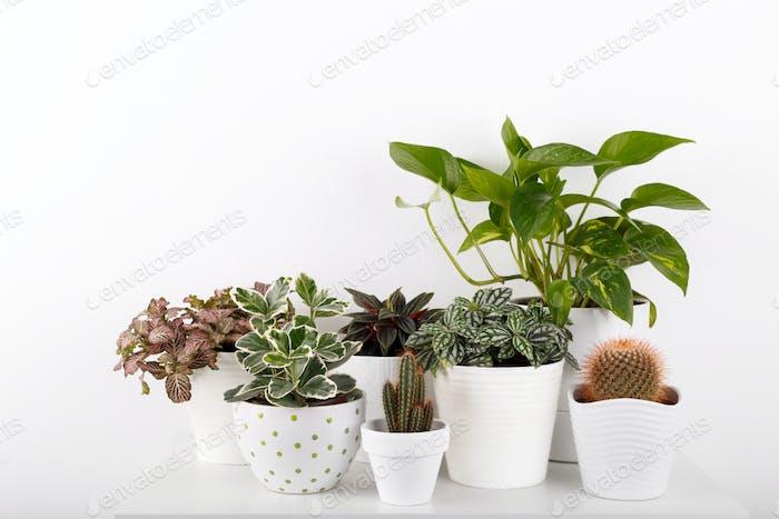 Modern houseplants