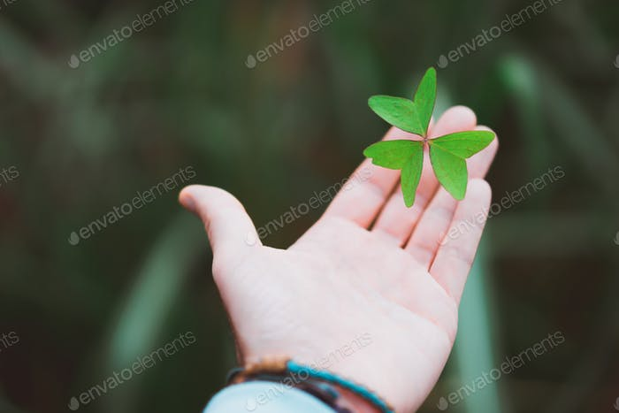 Exotic green clover leave on the stretched man hand palm