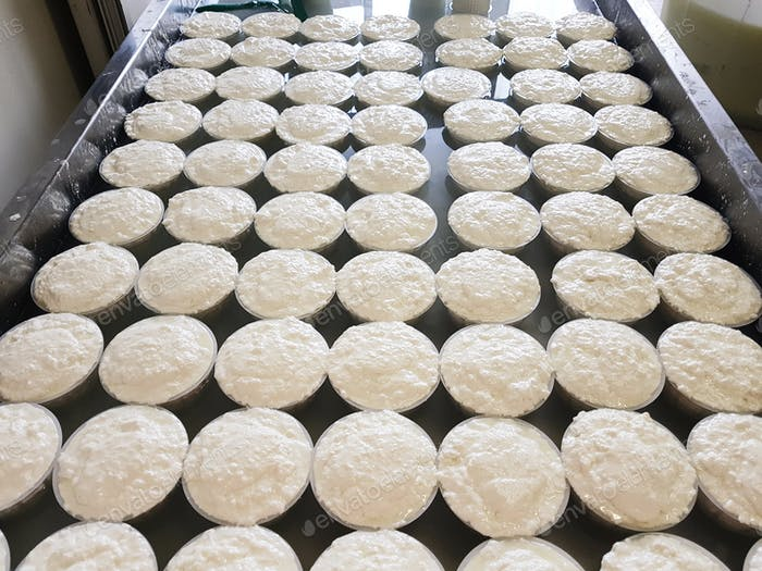 Ricotta cheese in plastic molds on cheese factory in Italy