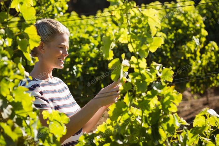 Female vintner using mobile phone in vineyard