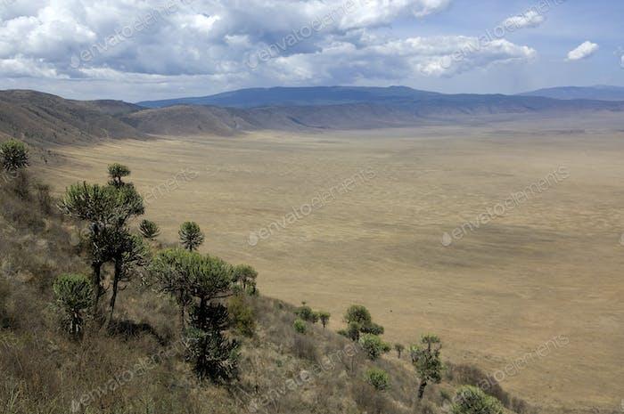 Blick auf den Ngorongoro Krater, Tansania