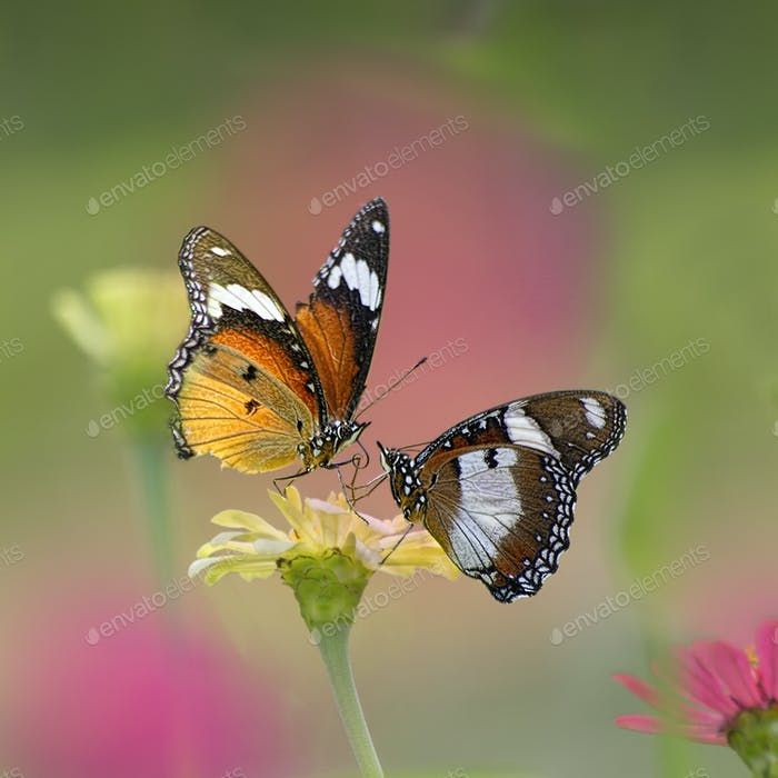Butterflies Sitting on a Flower. Macro Photo Shoot