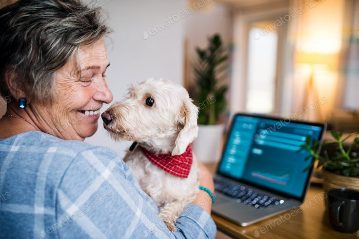 Senior woman with pet dog and laptop working in home office