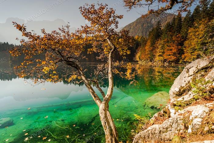 Glowing orange leaves at Fusine Lake,Italy