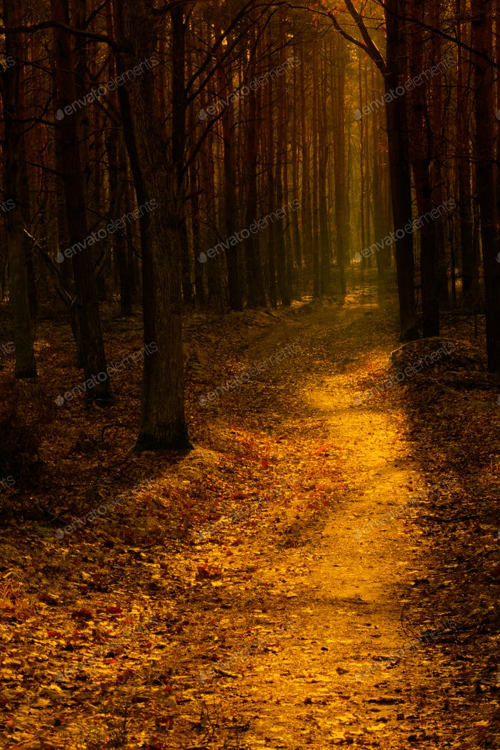 Forest path in the warm autumn light