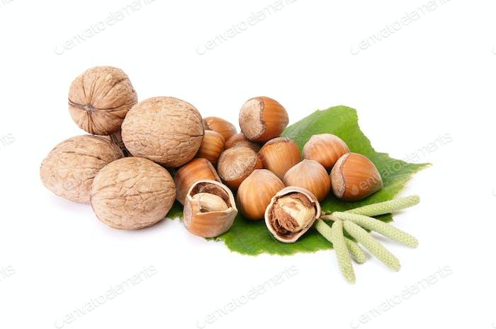 Wonderful view of hazelnuts and walnuts  with buds.
