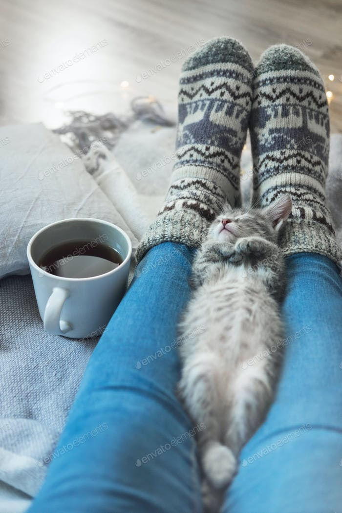 A small gray kitten is sleeping on the legs of the hostess. The cat rests after eating