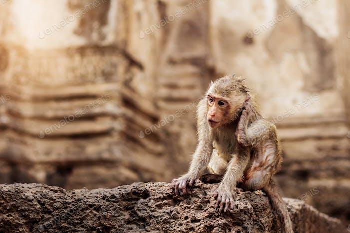 Monkey on stone
