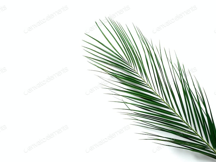 Palm leaves on brown wooden background, copy space