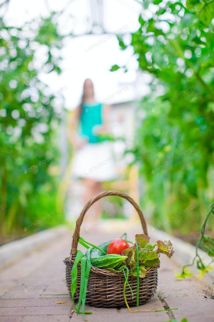 Nahaufnahme Korb mit Grün und Vagetables im Gewächshaus