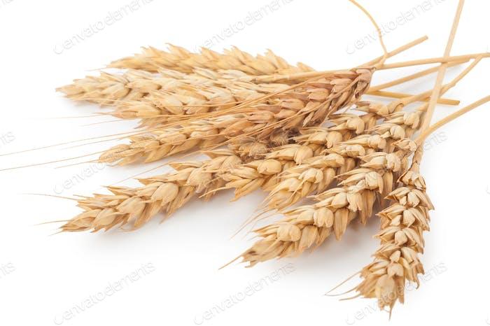 Weizenohren