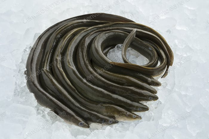 Fresh raw eels on ice