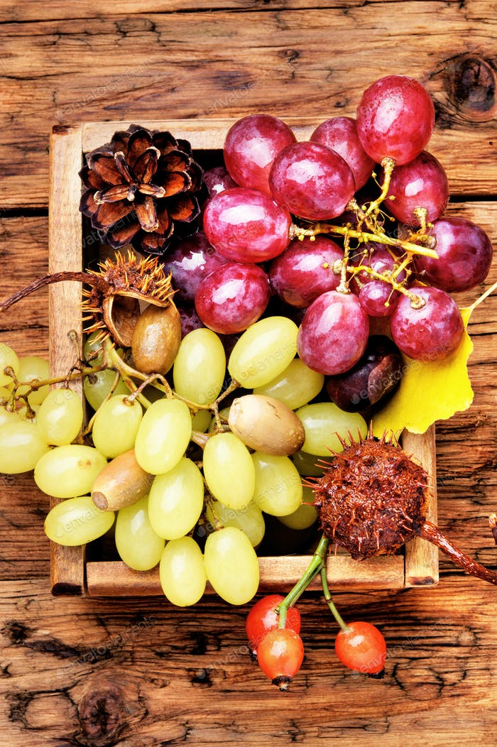 Bunches of fresh grapes