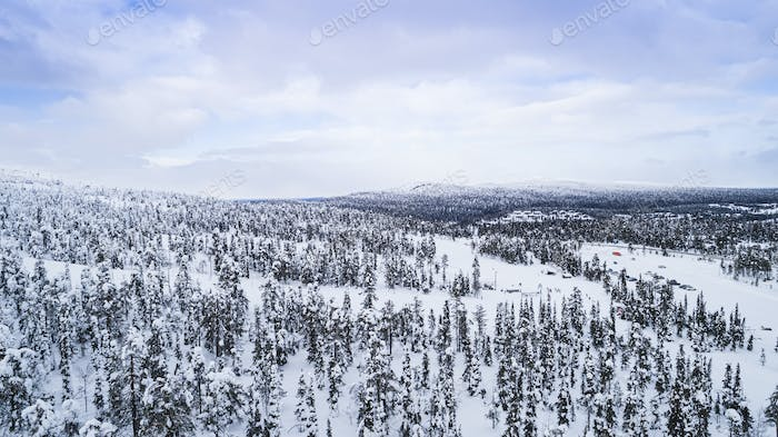 Forest covered with snow aerial view with drone view from above