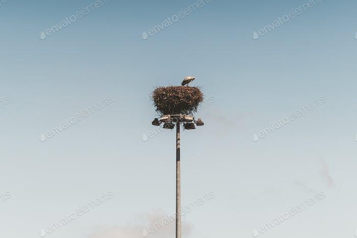 Nest with a stork on a tall pillar