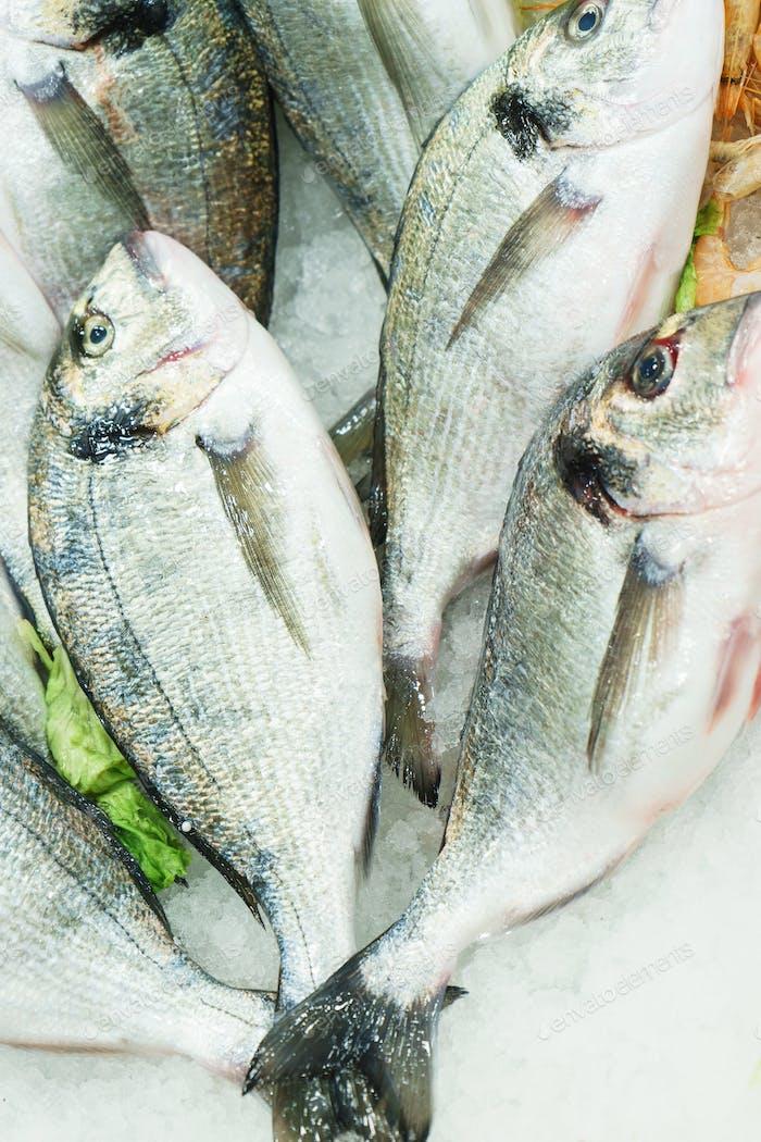 Frisch gekühlte Meeresfrüchte Fisch Dorado auf Eis an der Fischmarkttheke.