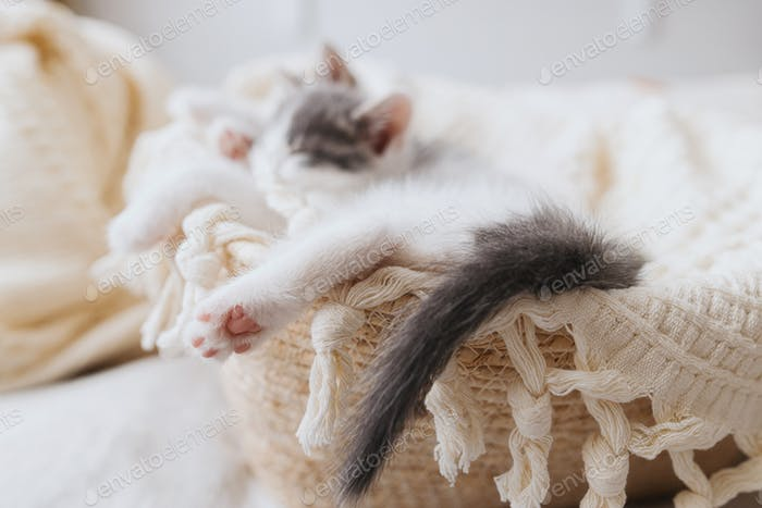 Cute little kitten sleeping on soft blanket in basket, paw with pink pads close up. Adoption