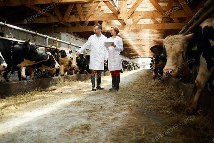 Spezialisten für Kettlefarm