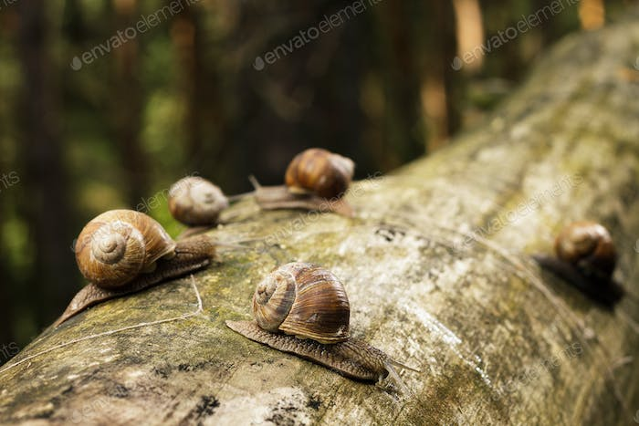 Snails On Tree Stem In Forest