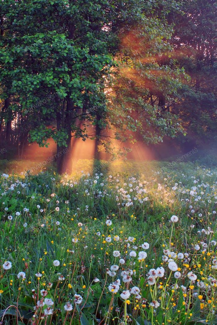 Bosque de primavera brumoso al Amanecer