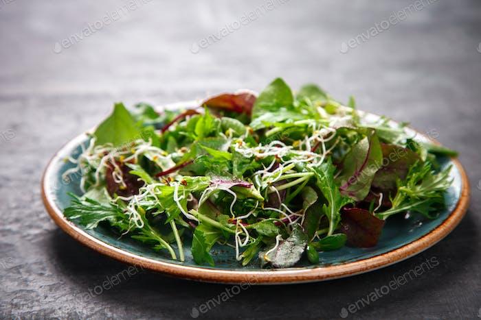 Frische Grüne Mischung Salat mit Microgreen.