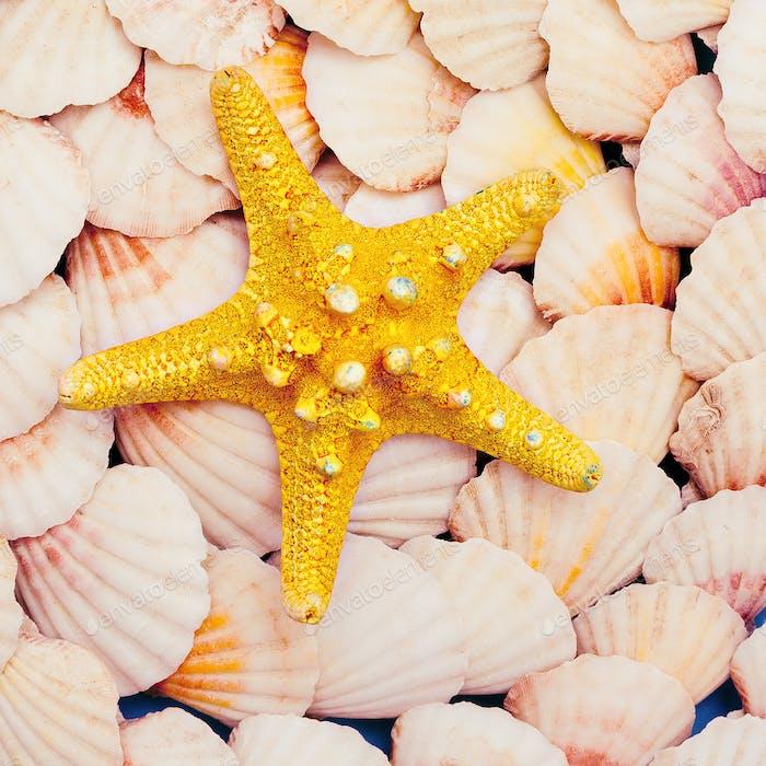 Starfish. Sea mood. Minimal art