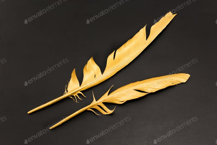Two gold feathers on a black background