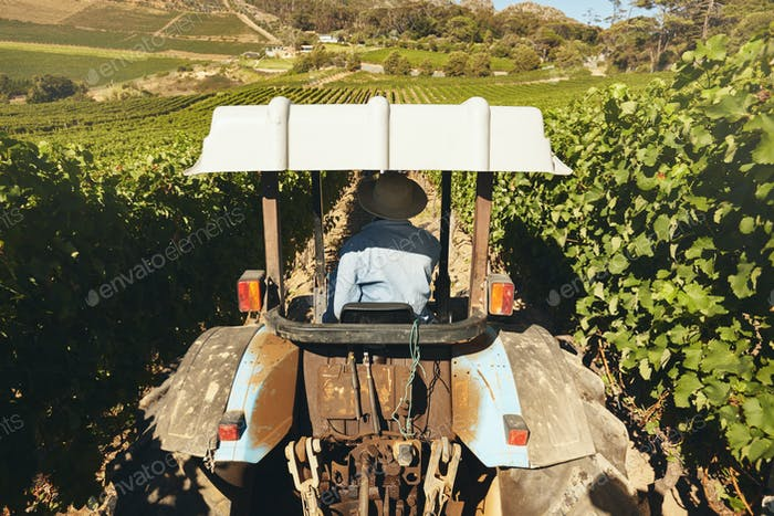 Farmer driving a tractor in the vineyard