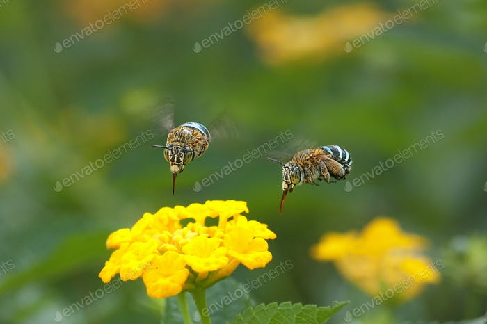 Bees on a Yellow Flower