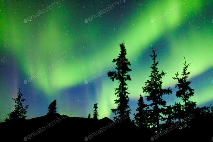 Yukon Taiga Fichte Nordlichter Aurora borealis