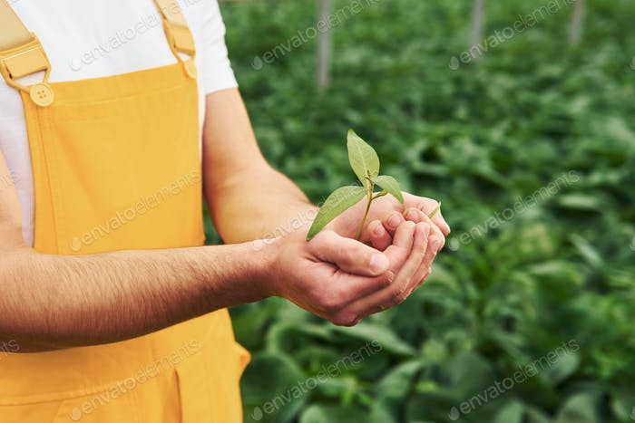 Holding plant in hands. Young greenhouse worker in yellow uniform have job inside of hothouse