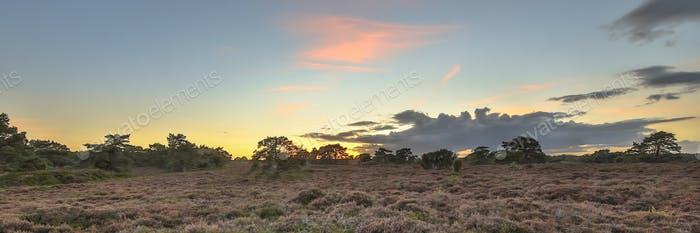 Panorama of heathland landscape