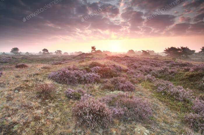 dramatic purple sunrise over heathland