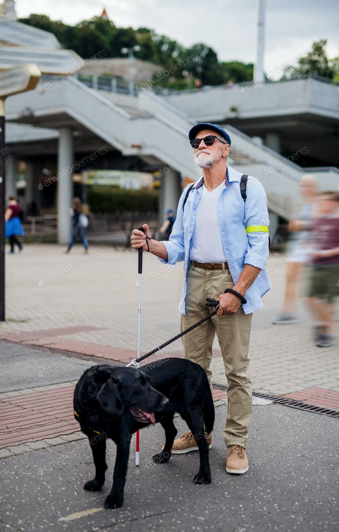 Senior blind man with guide dog standing outdoors in city
