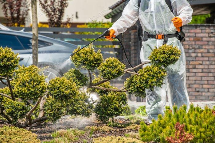Gardener Spraying Fungus Infected Plants in Backyard Garden