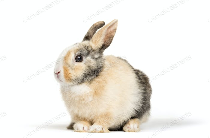 Rabbit in front of a white background, studio photography