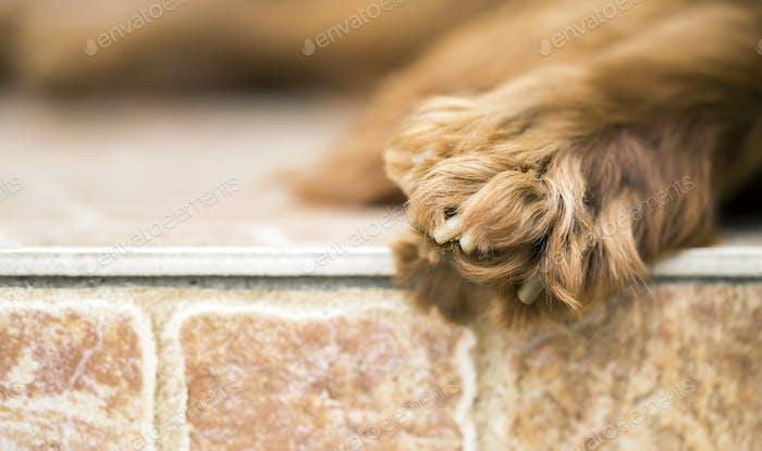 Hundepfote WebBanner mit Kopierraum