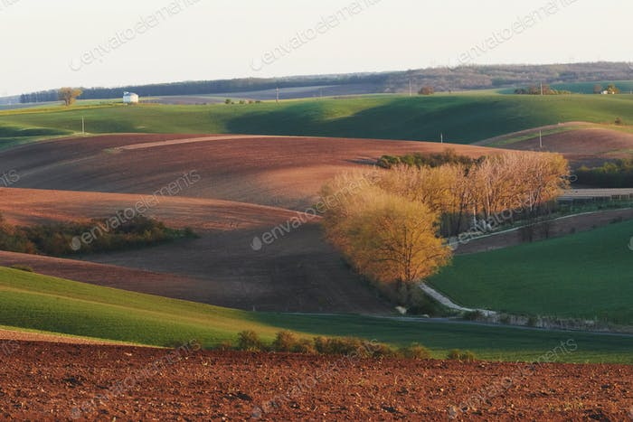 Schöne Natur. Bäume auf den grünen landwirtschaftlichen Feldern tagsüber