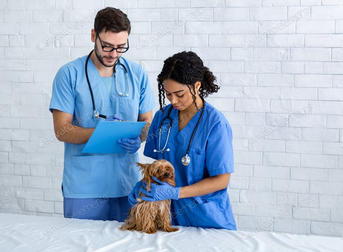 Veterinary doc and nurse with cute Yorkshire terrier in clinic, copy space
