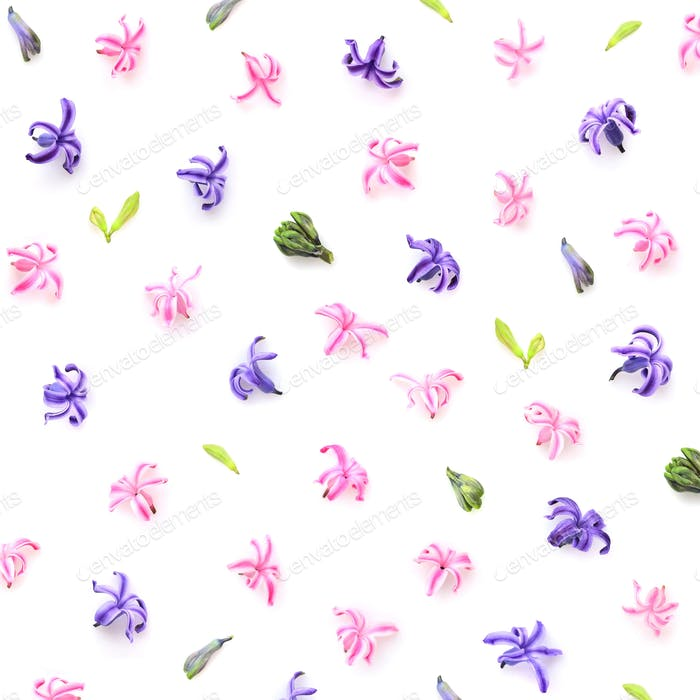 Floral pattern made of hyacinths flowers, bud on white backgroun