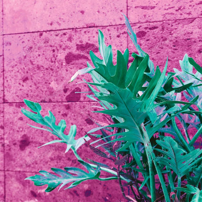 Plant on pink. Pink wall. Minimal street art