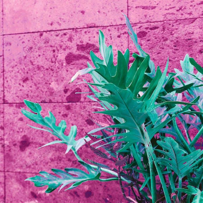 Plant on pink. Pink wall. Minimal street art