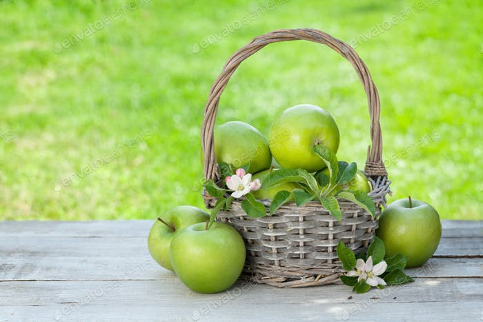 Fresh garden green apples in basket