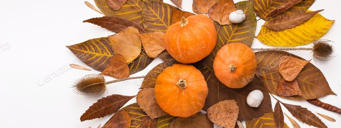 Close up of golden herbarium with pumpkins on white